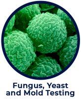 Fungus Yeast